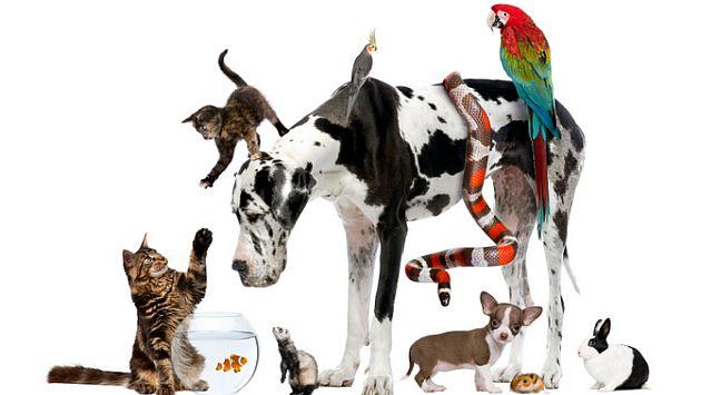mascotas y  animales de compañia