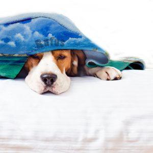 mantas para perros personalizadas